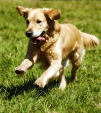 Dog park to reopen